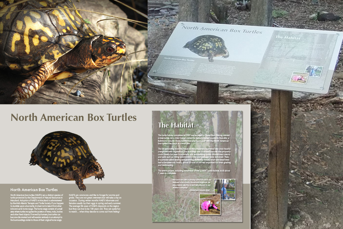 "Box Turtle : This  ""Eastern Box Turtle-arium"" is a private rehab & protective enclosure for these native Maryland reptiles"