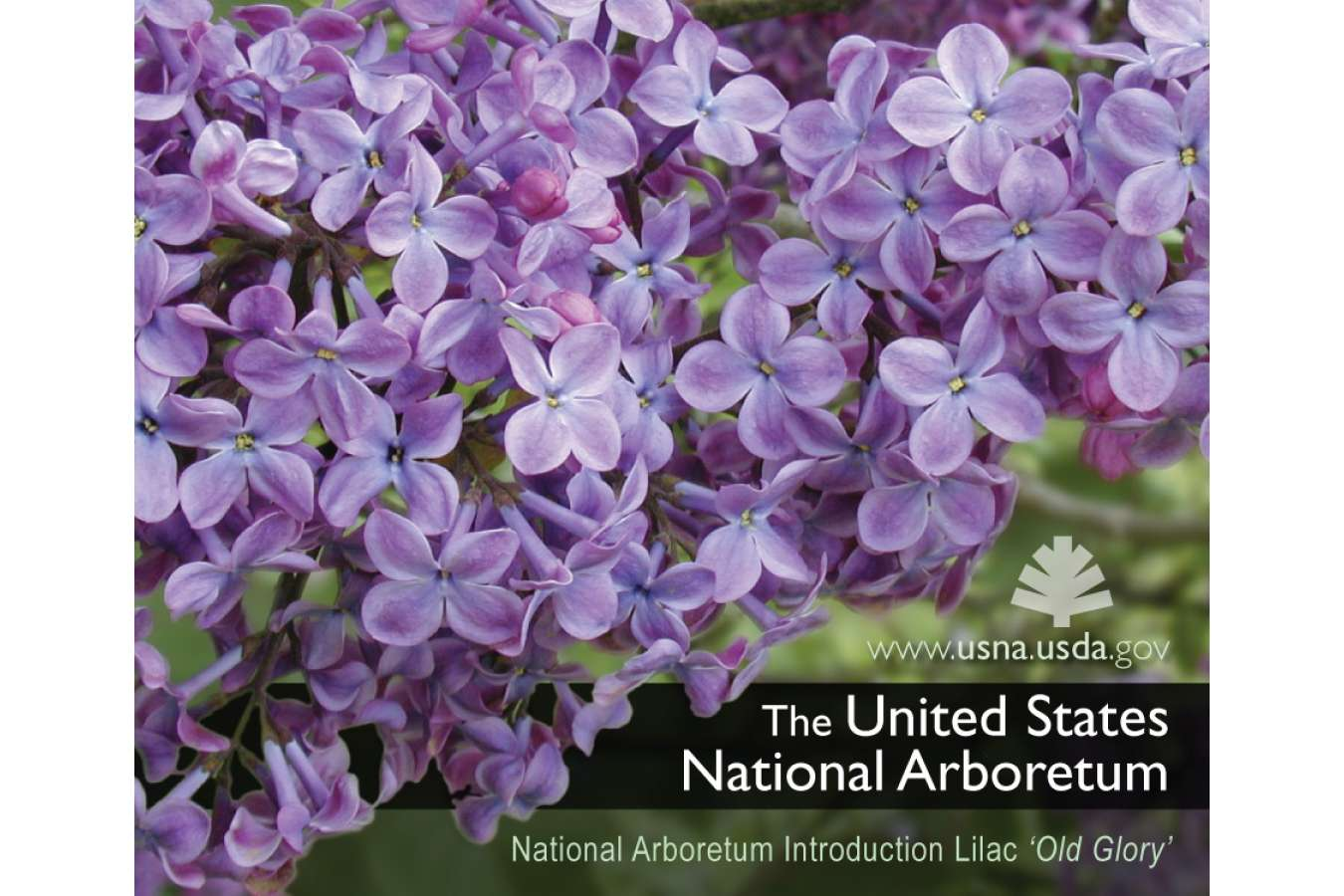 Arbor 5MAG  : US Arboretum Brand refrigerator magnet Promo Gift for Visitors